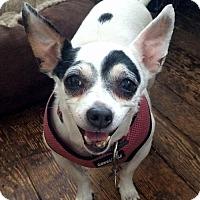 Adopt A Pet :: Lolita - Staten Island, NY
