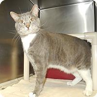 Adopt A Pet :: Chatty - Newport, NC