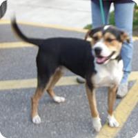 Adopt A Pet :: Marley - Cheboygan, MI