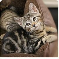 Adopt A Pet :: Jem - Hazlet, NJ