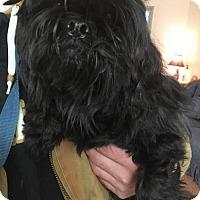 Adopt A Pet :: Charlie - Harrisville, WV