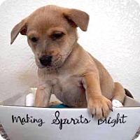 Adopt A Pet :: Schroeder (FORT COLLINS) - Fort Collins, CO