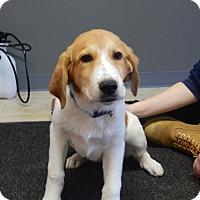 Adopt A Pet :: Paul - Sparta, NJ