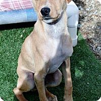 Adopt A Pet :: Jackson - San Jacinto, CA