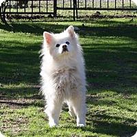 Adopt A Pet :: Skippy - Capistrano Beach, CA