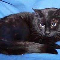 Adopt A Pet :: Katie - Colorado Springs, CO