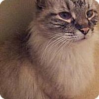 Adopt A Pet :: Mittens - Columbus, OH