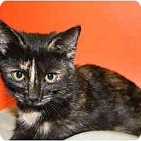 Adopt A Pet :: REBECCA - SILVER SPRING, MD