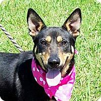 Adopt A Pet :: DIVA/Summer Special Price - Glastonbury, CT