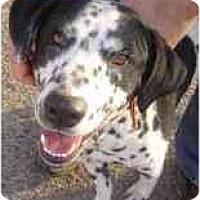 Adopt A Pet :: Cristo - Mesa, AZ