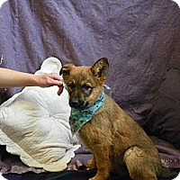 Adopt A Pet :: Blossom - Roosevelt, UT