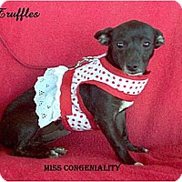 Adopt A Pet :: Truffles - Tucson, AZ