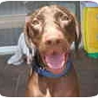 Adopt A Pet :: Hershey - Eustis, FL
