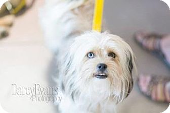 Small Dog Adoption Edmonton