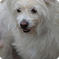 Adopt A Pet :: Shipley - Norwalk, CT