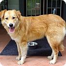 Adopt A Pet :: MARVELOUS MILLIE