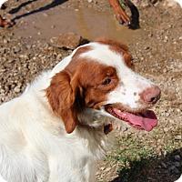 Adopt A Pet :: Rhett - Allentown, PA