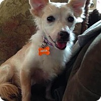 Adopt A Pet :: Isa - Manhattan, NY