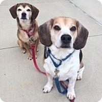 Adopt A Pet :: MISS PEANUT AND RILEY ROO - Albany, NY