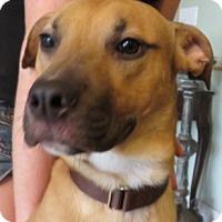 Adopt A Pet :: RooRoo Exp Handler - St Petersburg, FL
