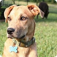 Adopt A Pet :: Tara - Houston, TX