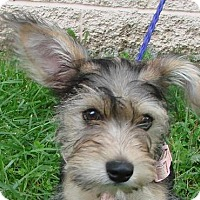 Adopt A Pet :: Mae - Erwin, TN