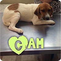 Adopt A Pet :: Cam - Garden City, MI