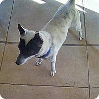 Adopt A Pet :: Zorro - Victorville, CA