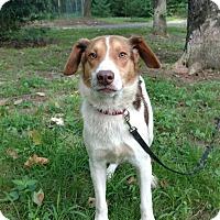 Adopt A Pet :: Mr. Smith - Capon Bridge, WV