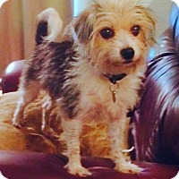 Adopt A Pet :: GEORGIE - Terra Ceia, FL