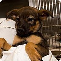 Adopt A Pet :: Tessa - Birmingham, AL