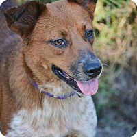Adopt A Pet :: Diamond - Loxahatchee, FL