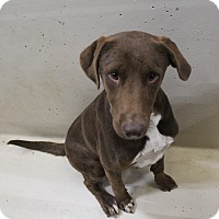 Shepherd (Unknown Type) Mix Dog for adoption in Odessa, Texas - A17 GUS