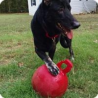 Adopt A Pet :: Raina - Greeneville, TN