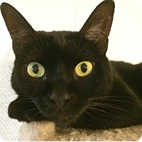 Adopt A Pet :: Dharma - Spring, TX