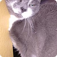 Adopt A Pet :: Katt - Morganton, NC