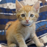 Adopt A Pet :: O'Malley - Hillsdale, IN