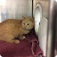 Adopt A Pet :: Leif - Janesville, WI