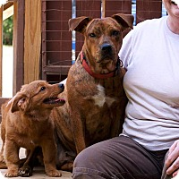 Adopt A Pet :: Muppy - Washington, DC