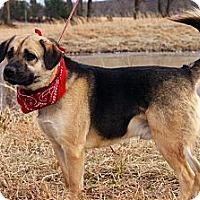Adopt A Pet :: Lucky Chucky - Princeton, KY