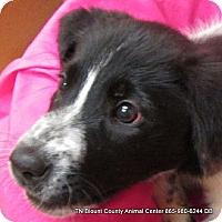 Adopt A Pet :: Juliette - Hop Bottom, PA
