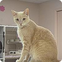 Adopt A Pet :: Chip - St. Petersburg, FL