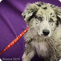 Adopt A Pet :: Proton - Broomfield, CO