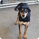 Adopt A Pet :: SAVY