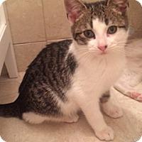 Adopt A Pet :: Kona - Long Beach, NY