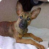 Adopt A Pet :: Bella (aka Bambi) - San Diego, CA