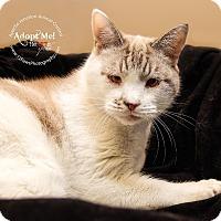 Adopt A Pet :: Filly - Apache Junction, AZ