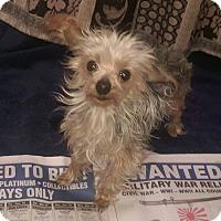 Adopt A Pet :: Tabitha - Antioch, IL