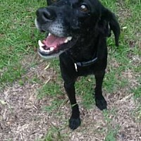 Adopt A Pet :: CEELO - Wilmington, NC