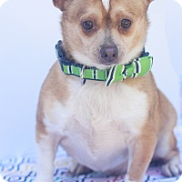 Adopt A Pet :: Fritz - Loomis, CA